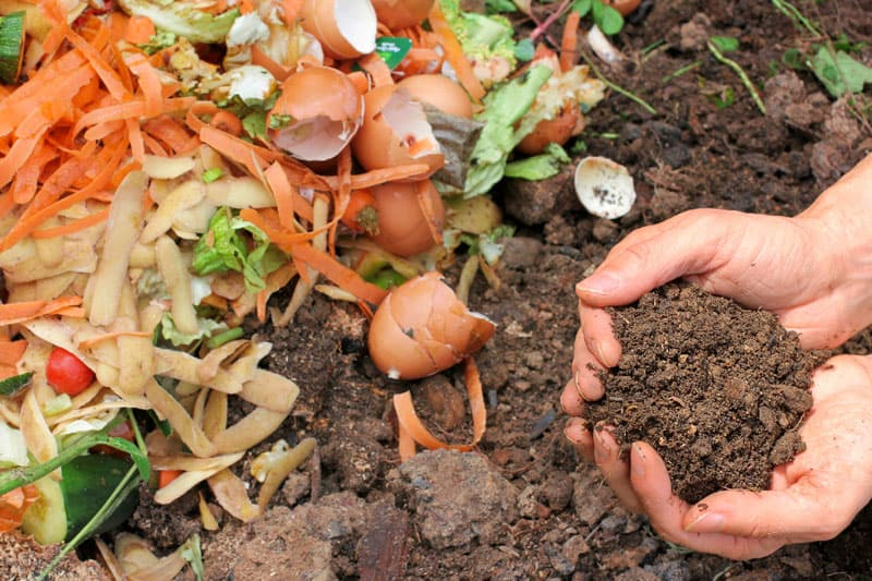 compost for soil