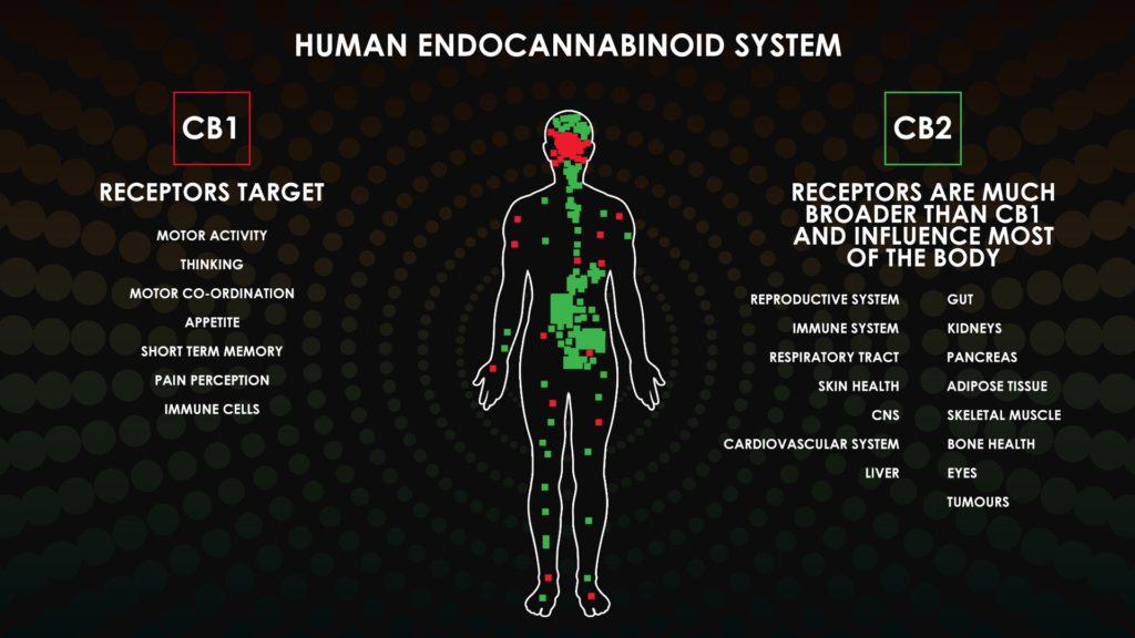 The affects of CBD on the body