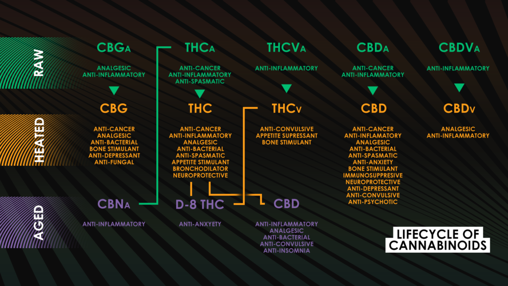 lifecycle of cannabinoids